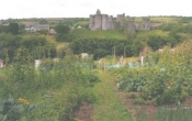 Kidwelly Allotment Association